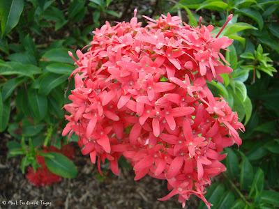 Yishun Town Garden Flowers 6