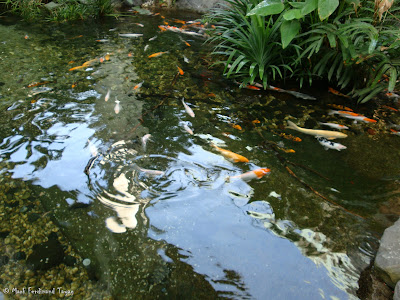 Yakult Rainforest Discovery Pond Photo 3