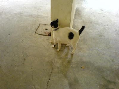 Singapore Cats Photo 1
