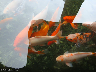 Bintan Lagoon Resort Koi Pond Photo 1