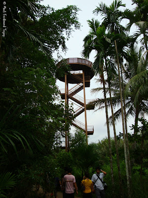 Pulau Ubin Jejawi Tower Photo 1
