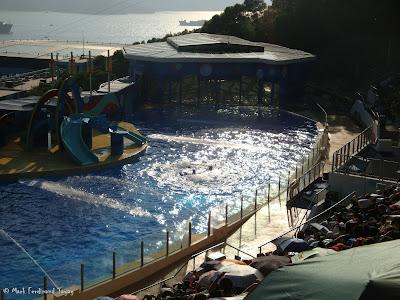 Ocean Park Live Dolphin Show Photo 3