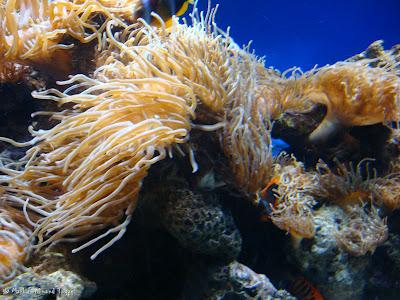 Atoll Reef Ocean Park Hong Kong Photo 5