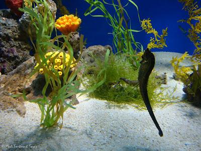 Atoll Reef Ocean Park Hong Kong Photo 7