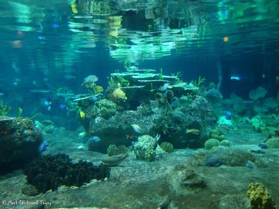 Atoll Reef Ocean Park Hong Kong Photo 10