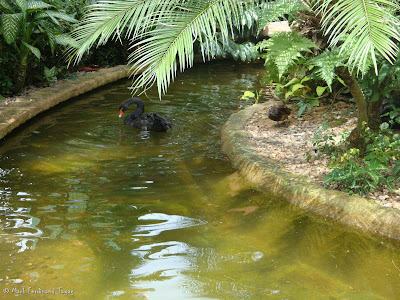 Singapore Jurong Bird Park Photo 6