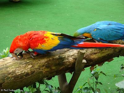 Jurong Bird Park - Birds n Buddies Show Photo 12