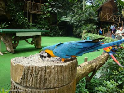 Jurong Bird Park - Birds n Buddies Show Photo 14
