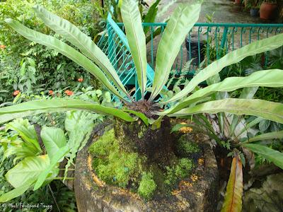 Butterfly Park, Kuala Lumpur Photo 2