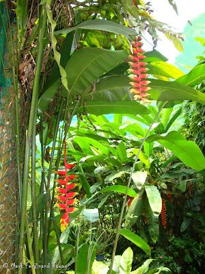 Butterfly Park, Kuala Lumpur Photo 6