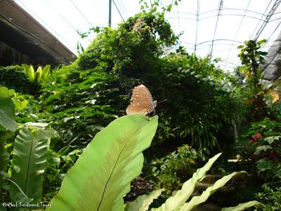 Butterfly Park, Kuala Lumpur Photo 8