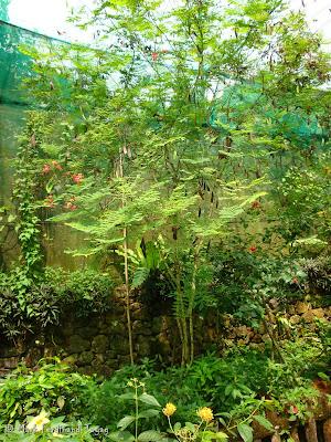 Butterfly Park, Kuala Lumpur Batch 2 Photo 14