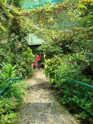 Butterfly Park, Kuala Lumpur Batch 3 Photo 10