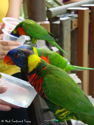 Jurong Bird Park - Lory Loft Batch 2 Photo 1