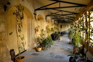 Ogrody Rośliny Do Ogrodu Zimowego