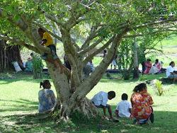 Sous l'arbre et dans l'arbre
