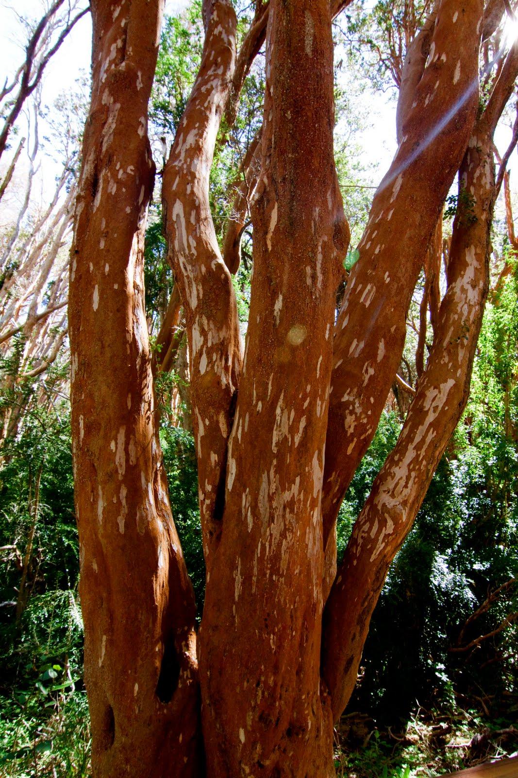 arbusto paliza