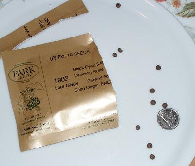 [Photo: Thunbergia alata 'Blushing Susie' seeds.]