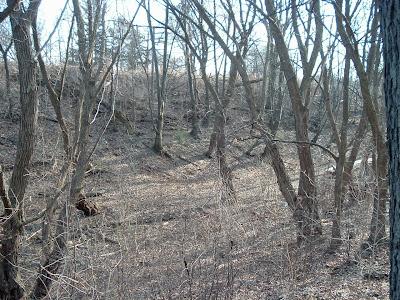 [Photo: small ravine in Toronto.]