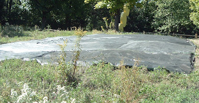 [Photo: ground covered with black plastic to kill the weeds in preparation for planting. High Park.]