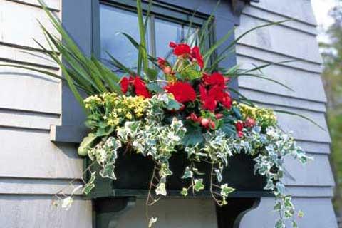 Prozori koji govore - Page 3 Window-box-flowers