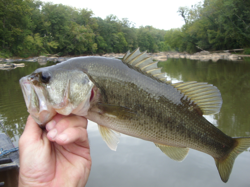 North carolina river fishing and canoeing with mack bass for Bass fishing north carolina