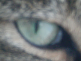 Eye Am Watching You :3