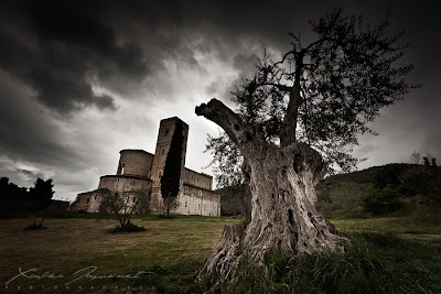 pohon kuno