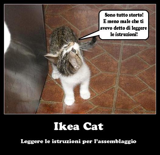 Ikea Cat Ikea Cat mici divertenti