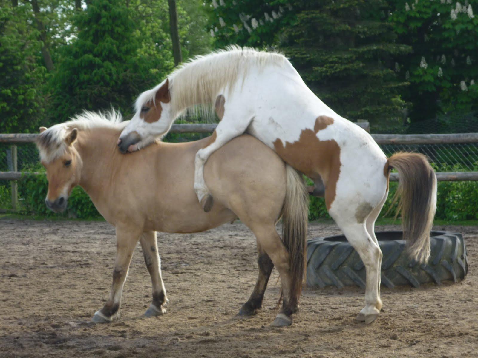 Die Lustige Ponyschule Katzenumzug Und Romeo Julia