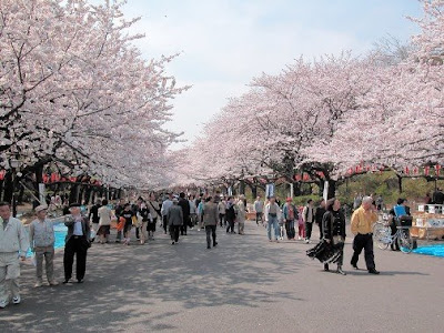 تقرير عن ساكورا Sakura%2520Photo_aj
