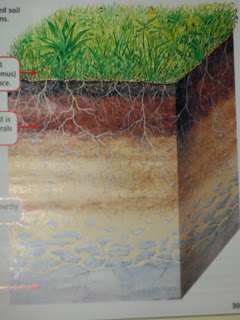 Welcome to watkins 39 wild west layers of soil for Describe soil
