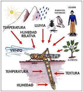 Ecosistemas Acuaticos Factores bioticos y abioticos