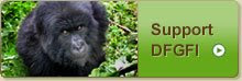 SAVE A REAL SILVERBACK