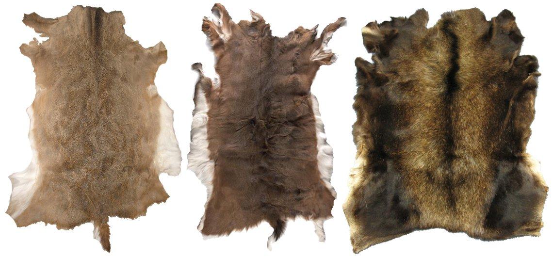 animal skins deer