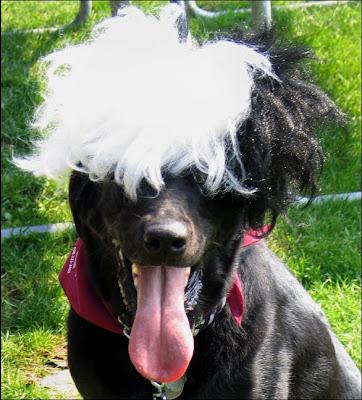 Roscoe wig