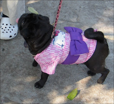 Hello Kitty dog costume