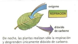 Fotos ntesis y respiraci n for Porque son importantes los arboles wikipedia