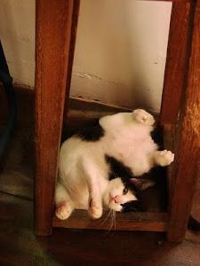 Flexibilidade!
