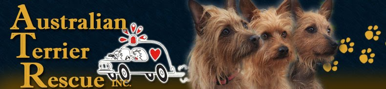 Australian Terrier Rescue, Inc