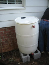 Rain barrel is in its place