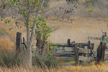 Palomar Mtn.