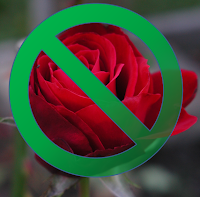 Picture of a red rose with a green NO sign in front by Jonathan Hunt