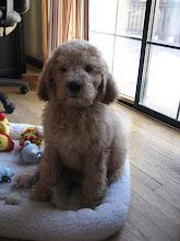 Cutie Pie Pup