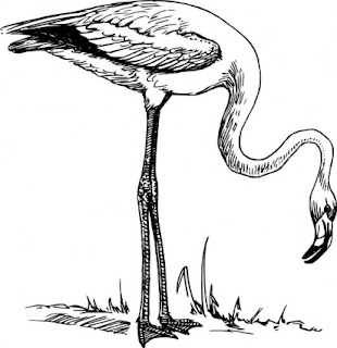 Black and white flamingo clip art