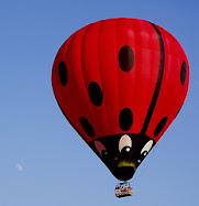 Ladybug! Ladybug! Fly away home!