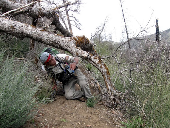 Joe in the Ventana Wilderness