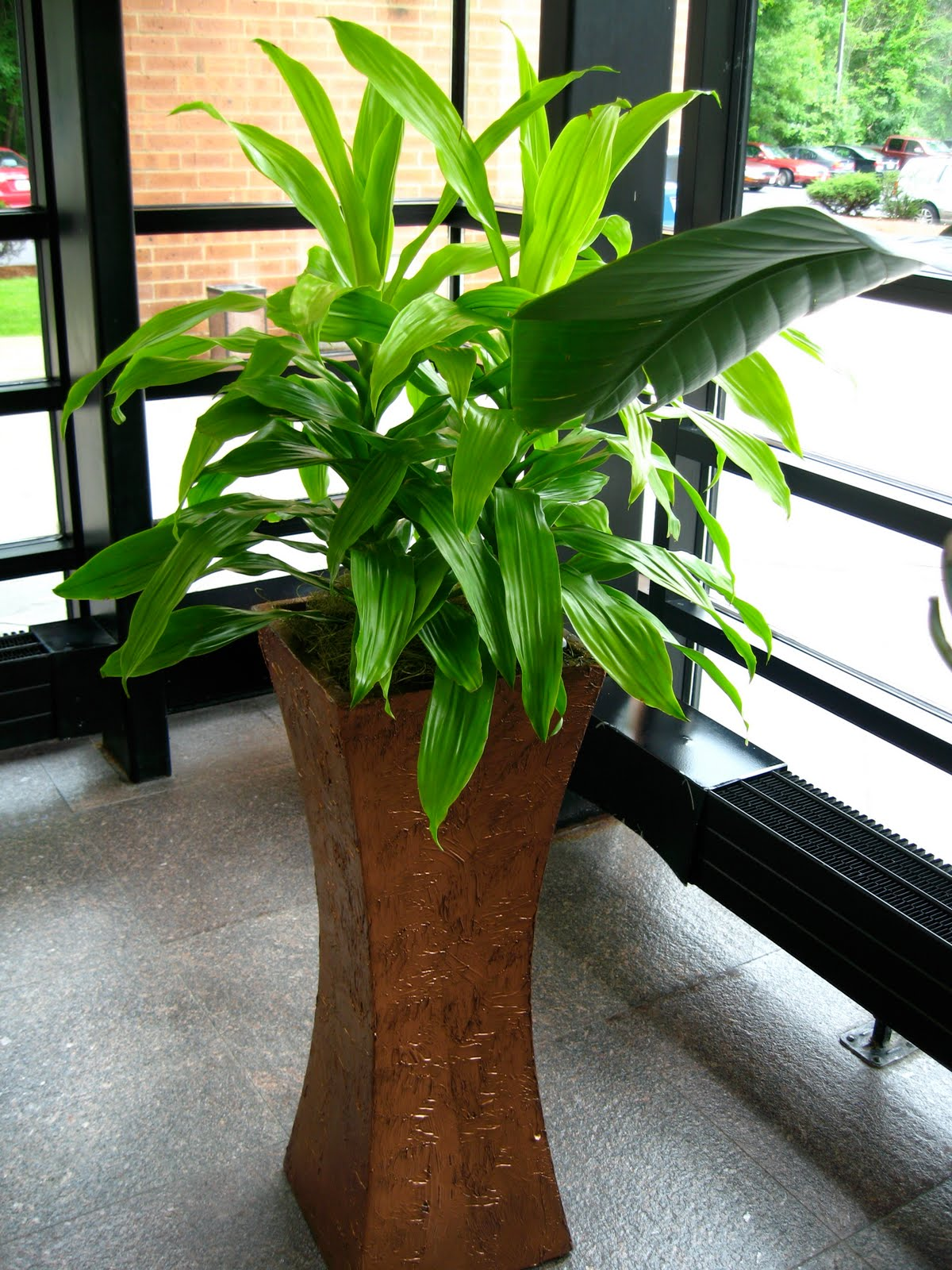 pdi plants blog how do your indoor office plants grow