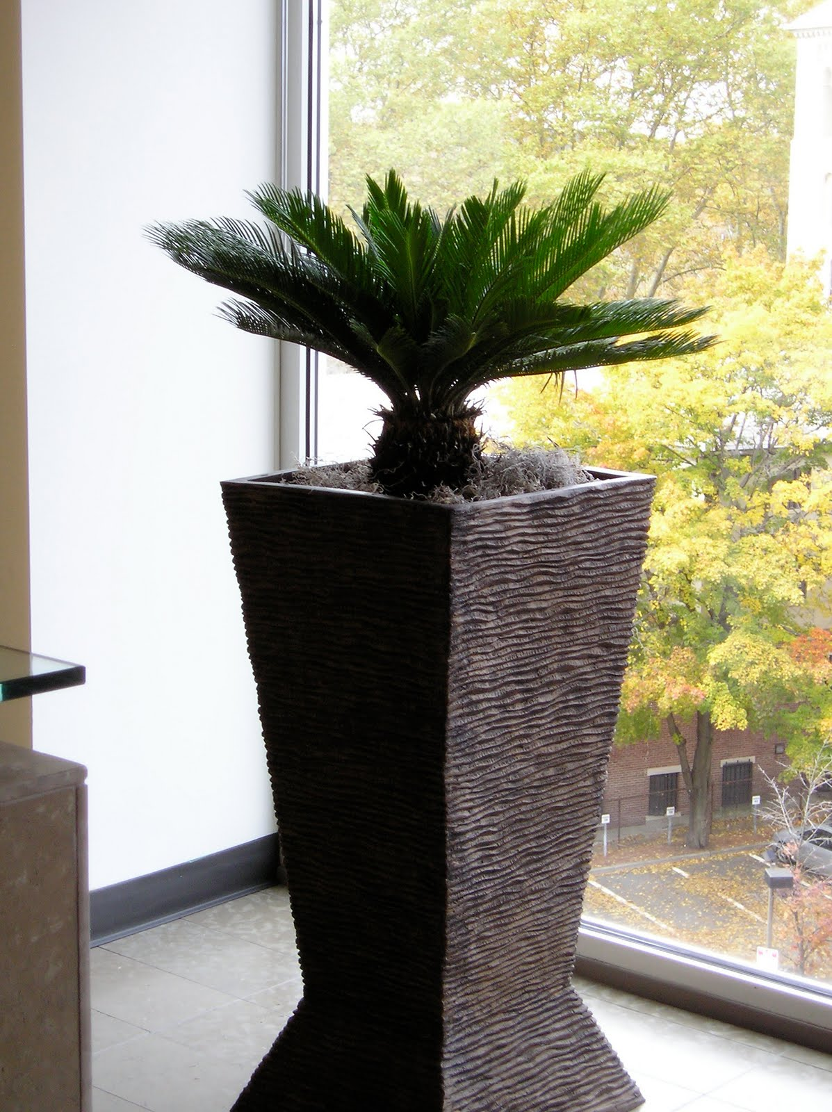 Pdi plants blog why use starbucks coffee grounds in your indoor office plants soil - Indoor desk plants ...