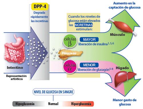 Glucosa en Sangre Normal - Cual es el Nivel de Glucosa Normal